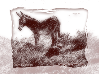 Desert Donkey Free Wallpaper for Computers